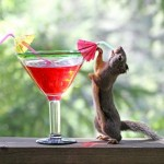 Squirrel Says Cheers!