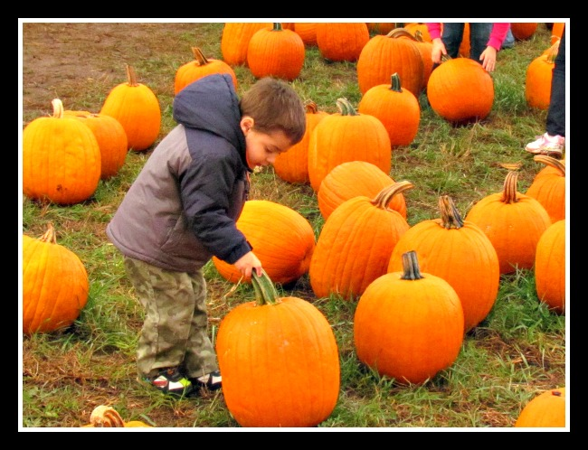 Levi_Picking_Pumpkins