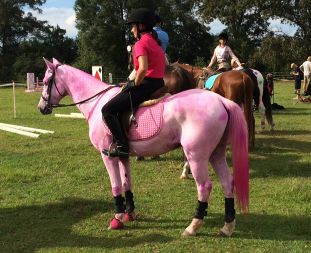 pink_breast_Cancer_Horse