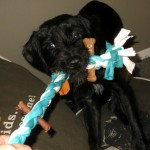 DIY Dog Chew Toy: 10 minute project #TreatThePups