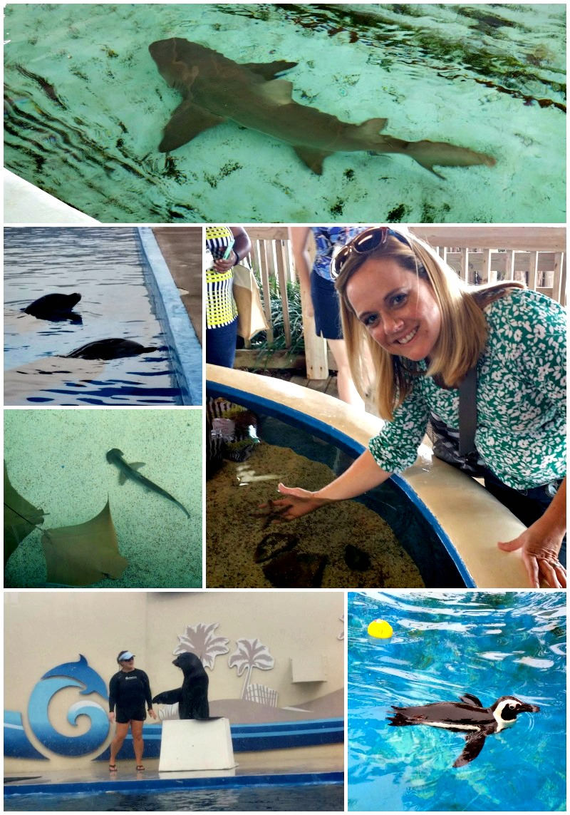 The Gulfarium is a great low-key family attraction in the Emerald Coast area.